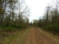 95 Acres Near Evergreen
