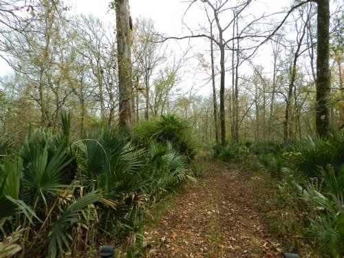 120 Acres Near Morrow & Big Cane : Morrow : Saint Landry Parish : Louisiana