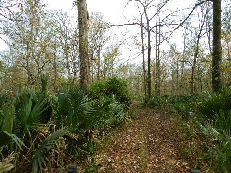 120 Acres Near Morrow & Big Cane : Morrow : Saint Landry Parish : Louisiana
