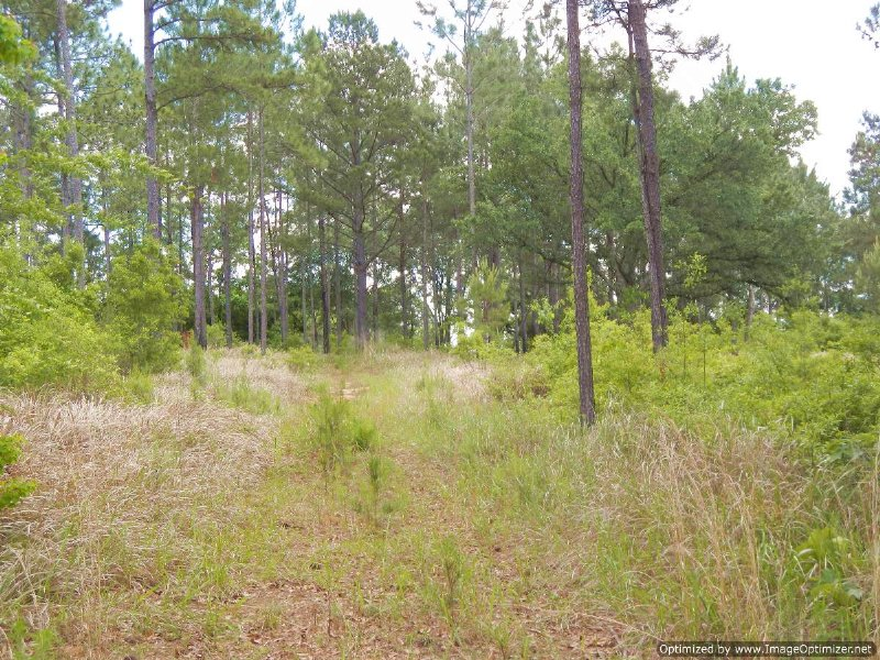 Premier Tract In South Ms : Carriere : Pearl River County : Mississippi