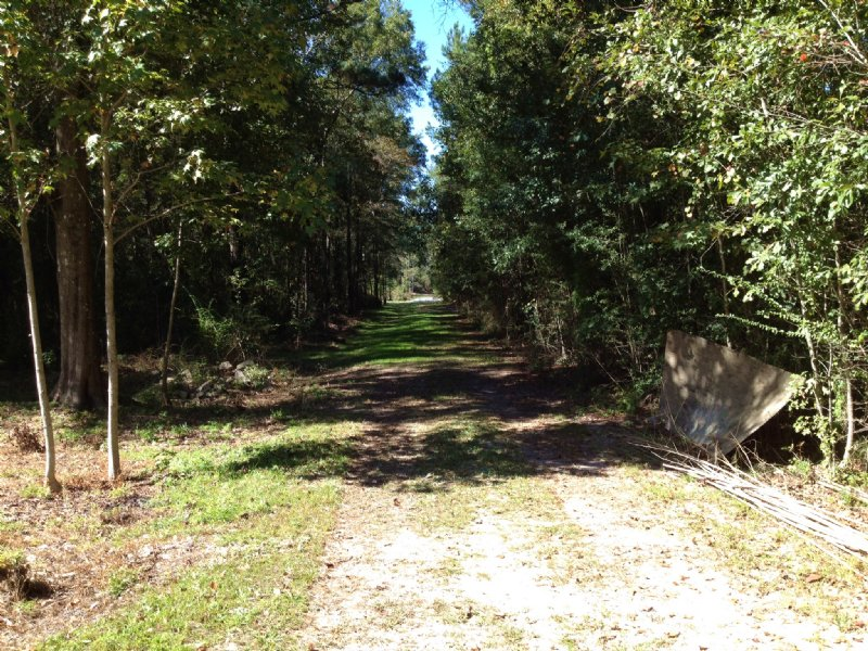 80 Acres West Of U.S. 43 In Axis : Axis : Mobile County : Alabama