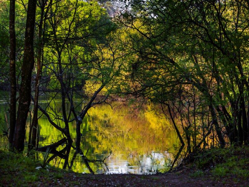 Edisto River Preserve : Adams Run : Dorchester County : South Carolina
