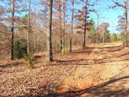 Walnut Creek Tract : Clanton : Chilton County : Alabama