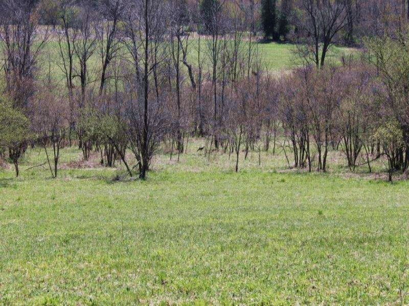 Land With Owner Financing Farmland : Columbia : Herkimer County : New York