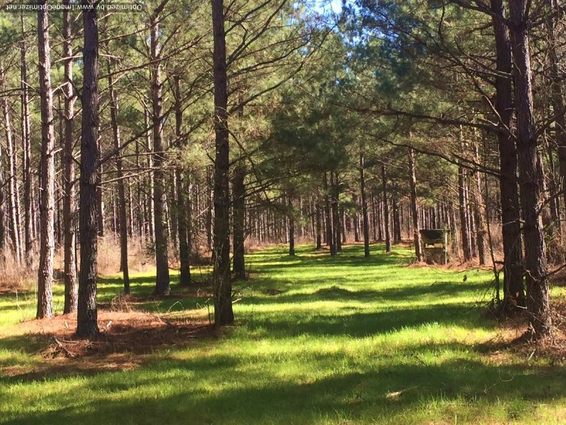 128 Acres : Thomastown : Leake County : Mississippi