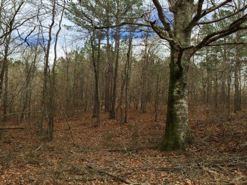 344 Acres : Kosciusko : Attala County : Mississippi