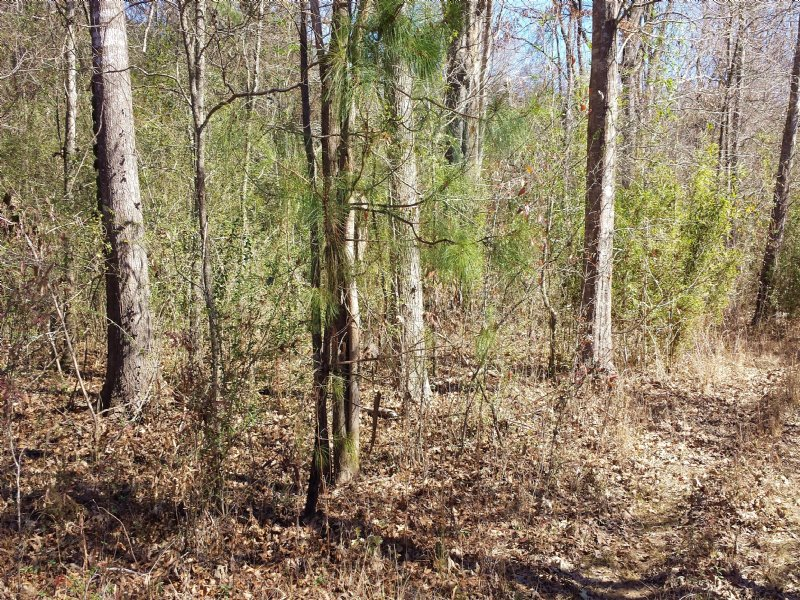 92 Acres : Raymond : Hinds County : Mississippi
