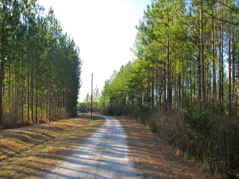 27 Acres, Great Homesite : Manor : Ware County : Georgia