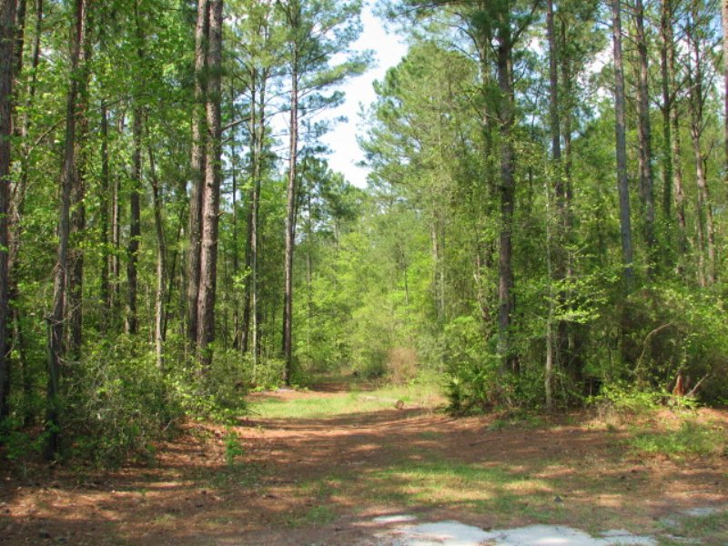 Liberty Preserve : Fleming : Liberty County : Georgia