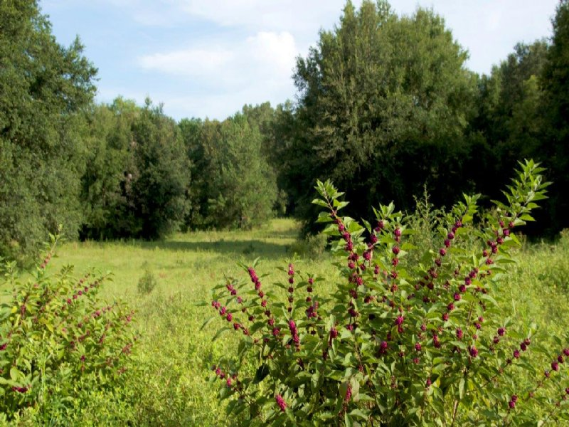 Live Oak Reserve : Newberry : Alachua County : Florida