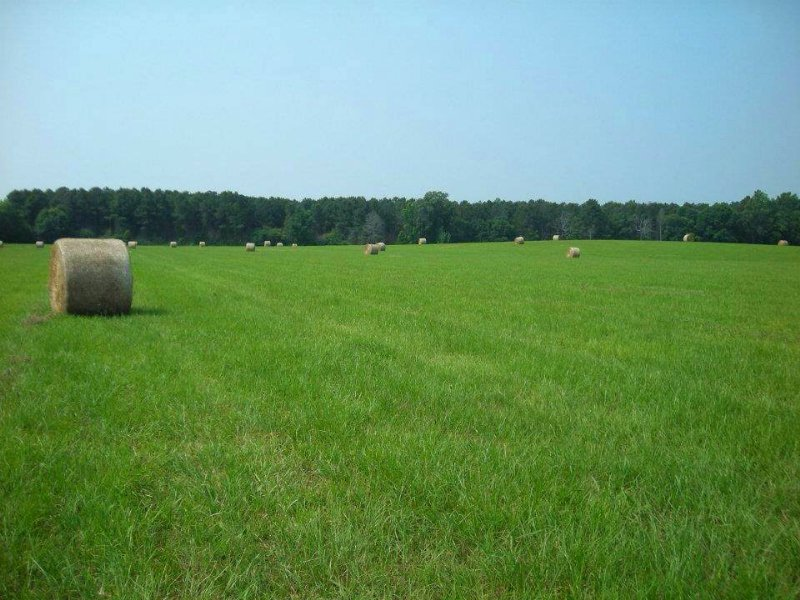 160 Acres Pasture Fenced : Forest : Scott County : Mississippi