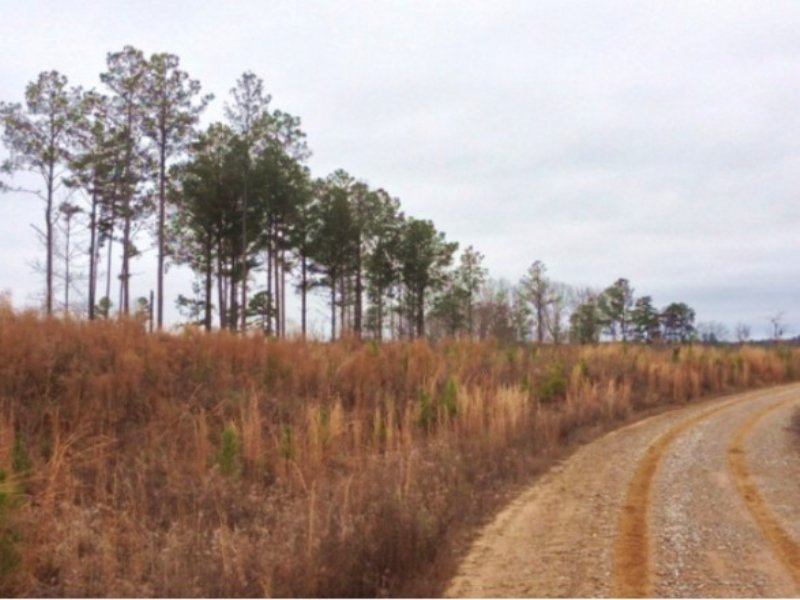 120 Acres Webster County : Eupora : Webster County : Mississippi