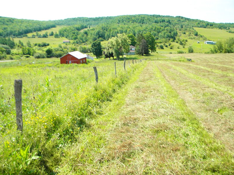 Farm With Barns On 37 Acres : Troupsburg : Steuben County : New York