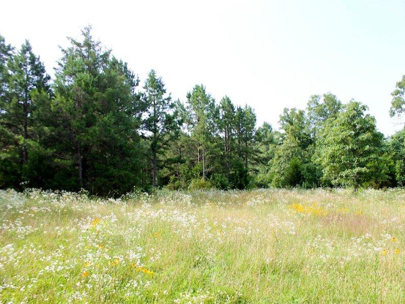 Ozarks Land Near Natl Forest : Winona : Shannon County : Missouri
