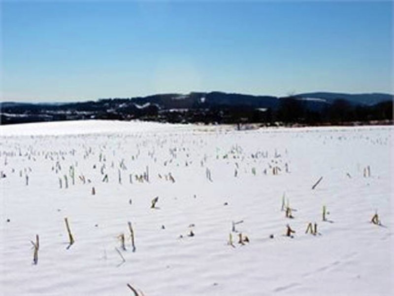 60 +/- Acres Of Land For Auction : Bloomsburg : Columbia County : Pennsylvania