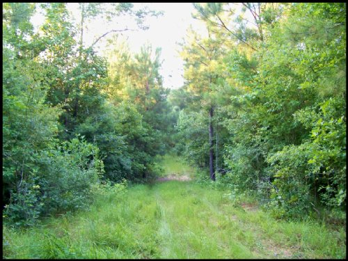 40 Acres : Gloster : Amite County : Mississippi