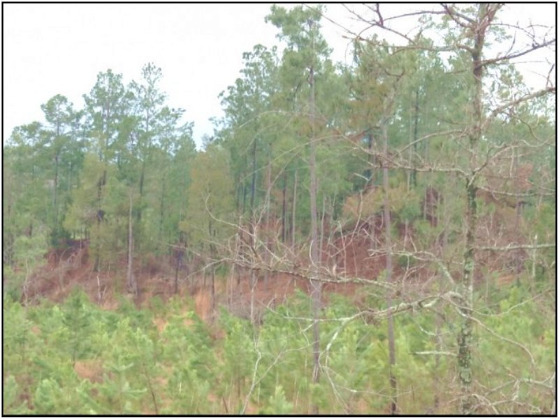 86.7 Acres In Carroll County : Black Hawk : Carroll County : Mississippi