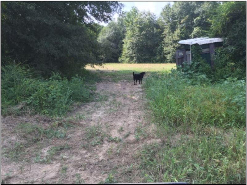 245 Acres In Carroll County : Vaiden : Carroll County : Mississippi