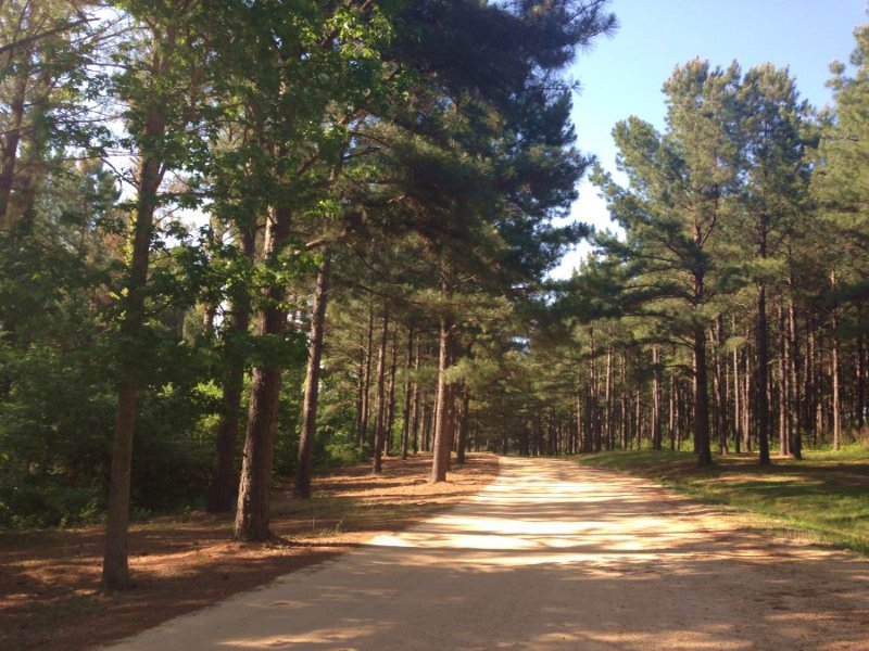 20 Acres : Brandon : Rankin County : Mississippi