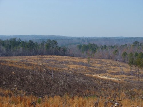Timber Inv., Hunting And Homesite : Rockford : Coosa County : Alabama
