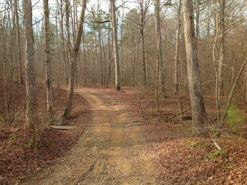 120+/- Acres Near Piedmont : Piedmdont : Cherokee County : Alabama