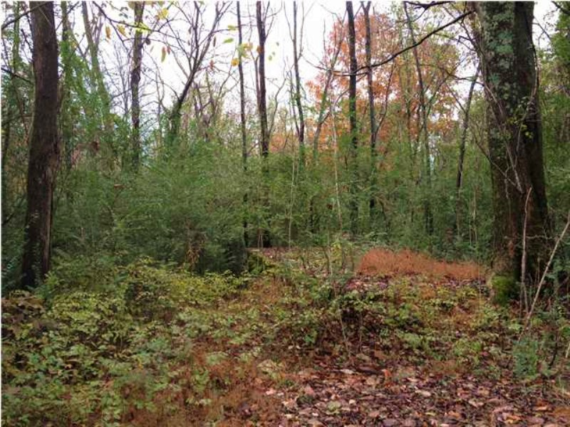 18.90+/- Acres Near Chattanooga : South Pittsburg : Marion County : Tennessee