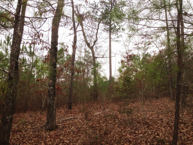 101.5 Acres Collins Rd-reduced : Fort Valley : Crawford County : Georgia