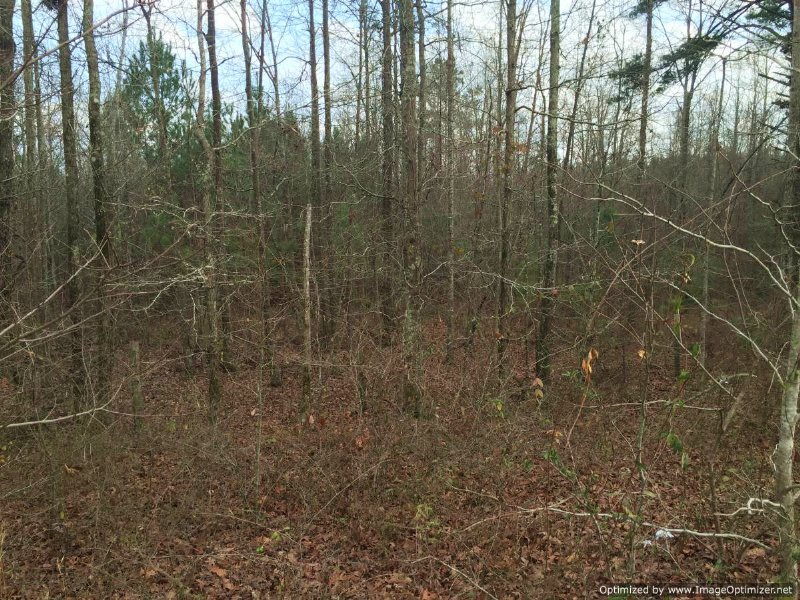 Great Tract For Deer And Turkey : Heidelberg : Jasper County : Mississippi