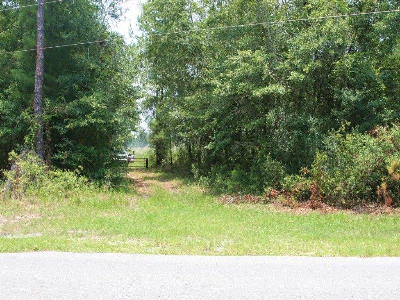 587 Acres Close To Town : Lake City : Columbia County : Florida