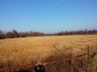 50 Acre Dryland Acres For Lease