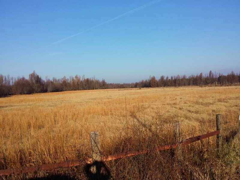 50 Acre Dryland Acres For Lease : Marmaduke : Greene County : Arkansas