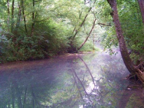 40+/- Acres In Sweetens Cove : South Pittsburg : Marion County : Tennessee