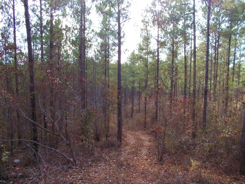 40 Acre Residential, Hunting : Clanton : Chilton County : Alabama
