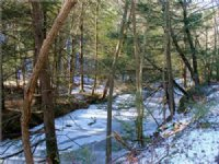 45+/- Acres Timberland  Real Estate