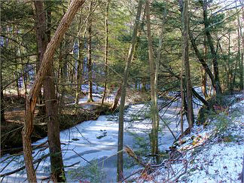 45+/- Acres Timberland  Real Estate : Catawissa : Columbia County : Pennsylvania