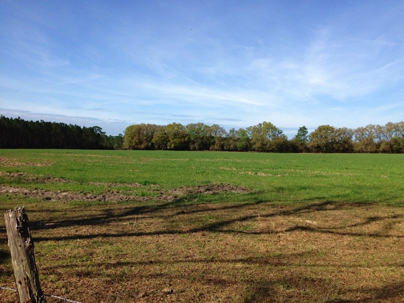310 Ac Pasture & Recreational Land : Old Town : Dixie County : Florida