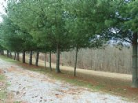 A3577 Home With 20 Acres M/l : Columbia : Adair County : Kentucky