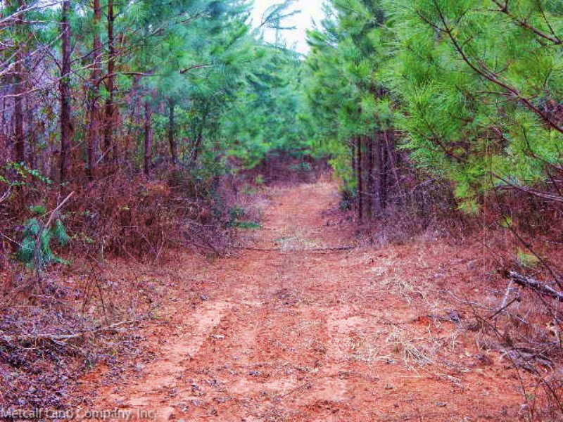 105 Acre Recreational Timber Tract : Gaffney : Cherokee County : South Carolina