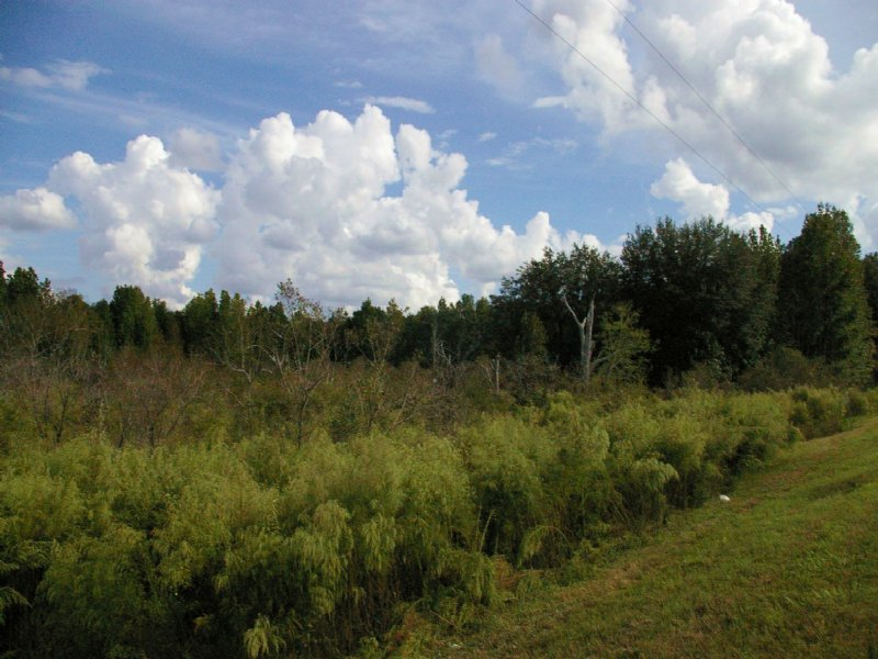 120.57 Acres Oak Hill-4 Lots : Trenton : Gilchrist County : Florida