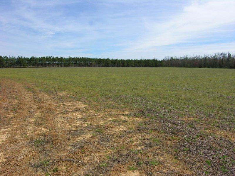 99.1 Acres Open & Wooded : Keysville : Burke County : Georgia