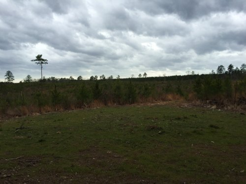 67 Acres In Wesson : Wesson : Copiah County : Mississippi
