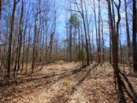 21.9 Acre Wooded Parcel