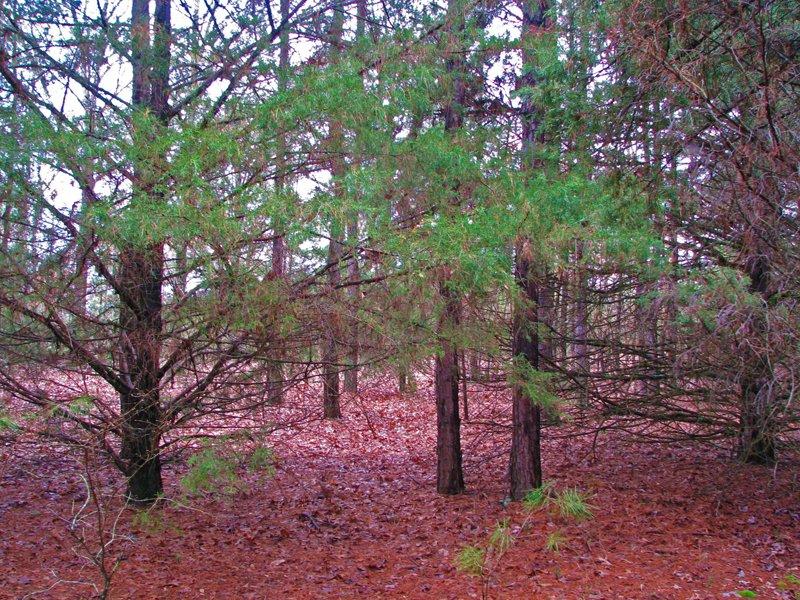 Sawyer Hills Tract 1 : Sawyer : Choctaw County : Oklahoma