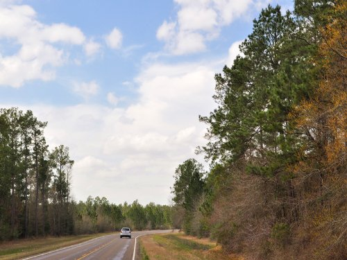 30 Ac Fm 943 Road Frontage : Kountze : Hardin County : Texas