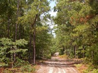 East McDuffie Hunting/Investment : Thomson : McDuffie County : Georgia