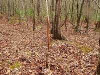 New Price 95 Ac Hunting Tract