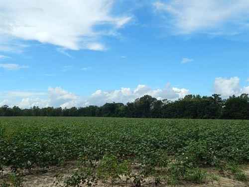 Premier Bulloch County Farm : Statesboro : Bulloch County : Georgia