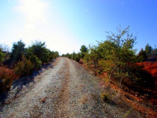 47.06 Acres On Whitehall Rd. : Sandy Hook : Goochland County : Virginia