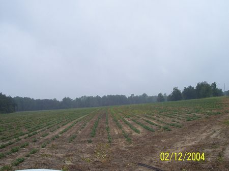 Excellent Farm And Hunting Tract : Pelham : Grady County : Georgia