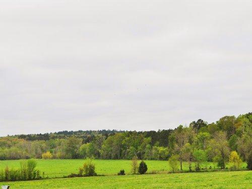 282 Acres Cr 2213 : Rusk : Cherokee County : Texas